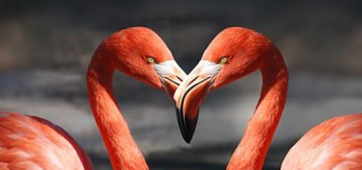 dialog minte inima all love