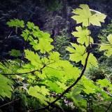 greenery-197609_1280