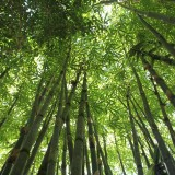 bamboo-566450_1280