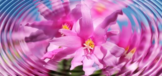 flower-110783_1280
