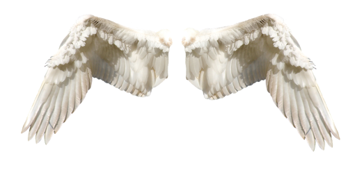wings-474114_1280
