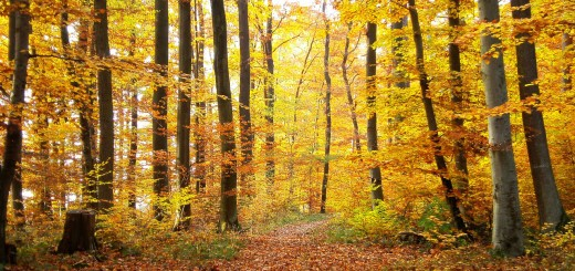 forest-356394_1280