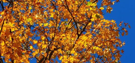 autumn-63271_1280