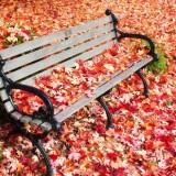 Minutul de spiritualitate cu Stefan Pusca: Retrospectiva saptamanii 16 noiembrie-20 noiembrie 2015