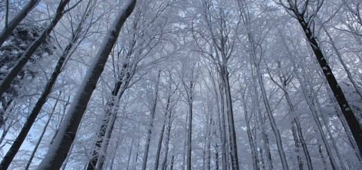 winter-1034038_1920