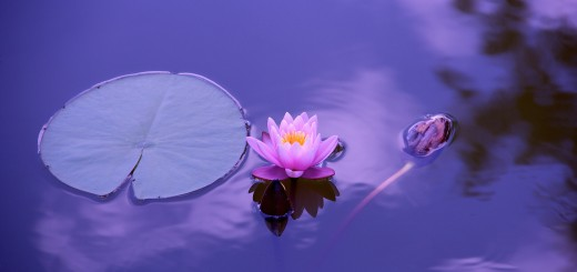 Meditatie Stefan Pusca